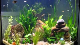 Easy Diy Ideas For Aquarium Decoration