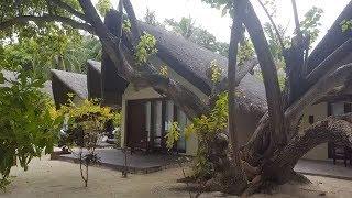 Ящерицы на Мальдивах, (пресмыкающиеся) Аnimals,Tiere