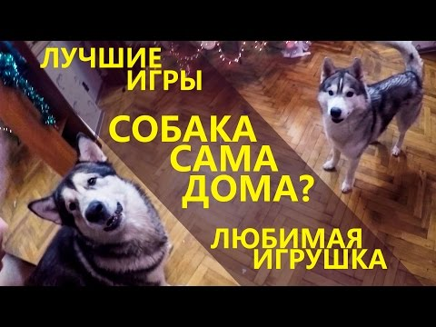 ЛЮБИМАЯ ИГРУШКА / FAVORITE TOY