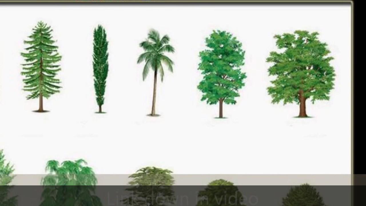 Tipos De árboles Comunes Youtube