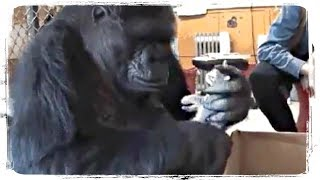 ПРИКОЛЫ С ЖИВОТНЫМИ | FUN WITH ANIMALS #516