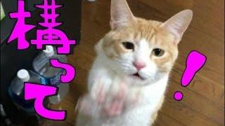 【超可愛い】かまって欲しい猫をひたすら無視してみた! I tried ignoring the cat I want to play thumbnail