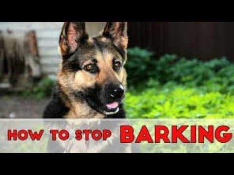 how-to-stop-dog-barking-by-smartphone!🔥