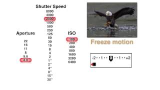Pick the Best Aperture, Shutter Speed and ISO Settings