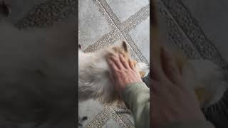 Pat my dog after school day 18