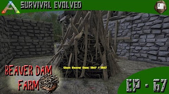 Beaver dams locations tips for looting ark survival evolved ark survival evolved beaver dam farm series z ep 67 malvernweather Choice Image