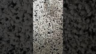 charcoal Cat Litter. Flushable into toilet