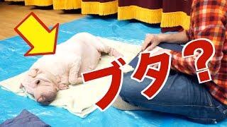 楽でした。(笑) 【もやちゃんカレンダー紹介動画】 https://youtu.be/...