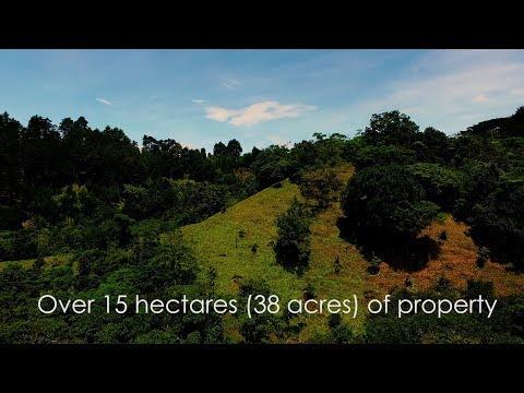 Organic Avocado Farm, Costa Rica, Teaser