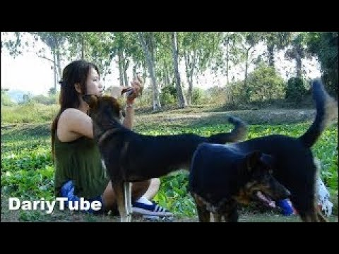 Smart Dogs Look At Their Owner Make Up