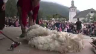 La Foire aux moutons à Servoz