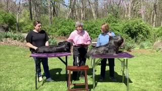 Getting to Know the Skye Terrier