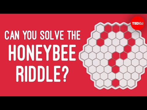 Video image: Can you solve the honeybee riddle? - Dan Finkel