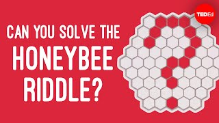 Can you solve the honeybee riddle? - Dan Finkel