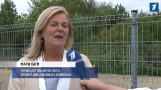 В Таллинне открылся новый приют для бездомных и потерявшихся домашних животных