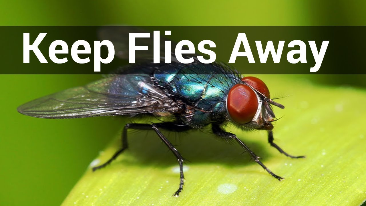 Keep Flies Away From Porch | How To Keep Flies Away From House
