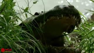 Amazing Elephant Save Baby Elephant From Crocodile Hunting  Animals Hunting Fail