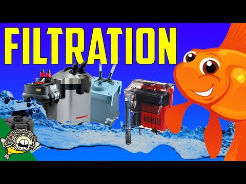 Filtration, the most heated Aquarium Topic! The live Stream edition.