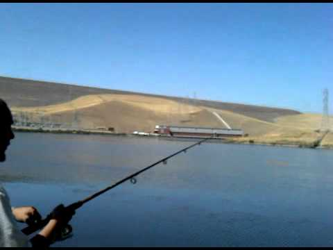 Striped bass fishing at san luis reservoir doovi for San luis reservoir fishing