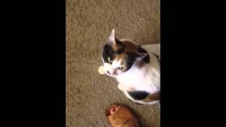 Lotka, kot, ktory rozmawia