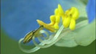 見つめてみよう!植物の世界 (3)花の性