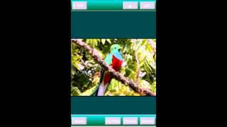 Video MediasClip - Video Downloader 動画ダウンローダー Android app download MP3, 3GP, MP4, WEBM, AVI, FLV Agustus 2018