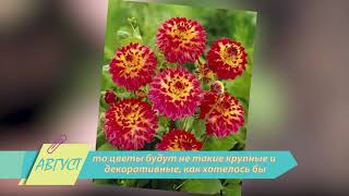 Как ухаживать за розами  Календарь Садовода