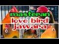 Masteran Lovebird Ngekek Panjang Terapi Paling Ampuh Memancing Lovebird Ngekek Panjang  Mp3 - Mp4 Download