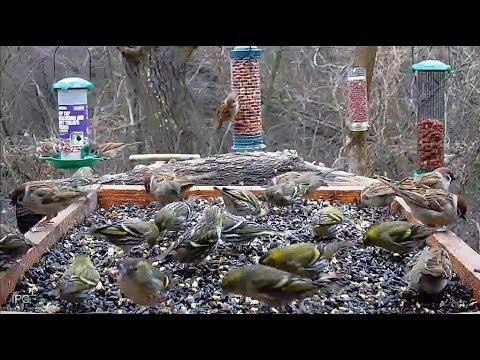 Bird FeederWatch Cam - Central Bulgaria
