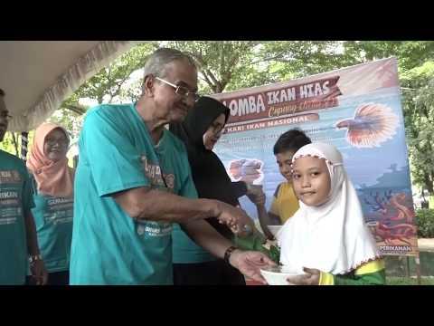 (INTANTV251118) Ikan Cupang Serbu Alun Alun Ratu Zalecha Martapura