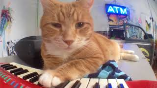 Keyboard Cat Studio Time