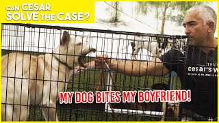 MY DOG BITES MY BOYFRIEND!! | Cesar Solves the Case | Limited Series