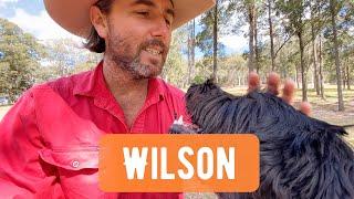 Wilson the Spoodle