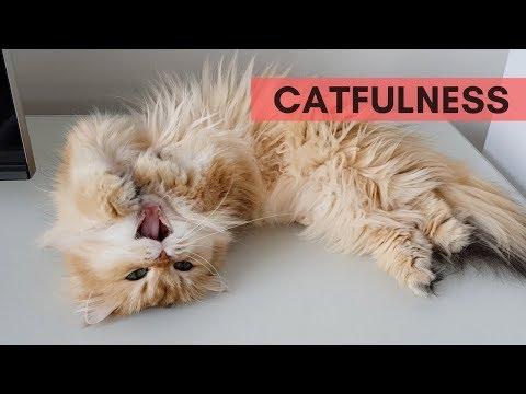 CATFULNESS #3 - FLOOF ON THE FLOOR