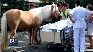 Letzter Wunsch: Pferd am Krankenbett