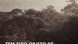 Guerrilha do Araguaia: borboletas, lobisomens e inverdades