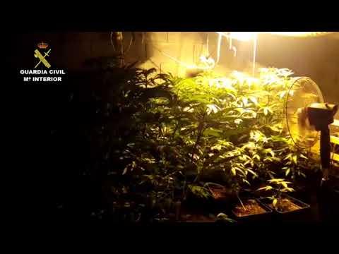 Marihuana atopada pola Garda Civil en Santa Comba