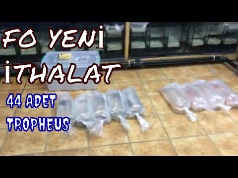 4 YENİ KOLONİ ALDIM-2 Koloni Bu Video Da