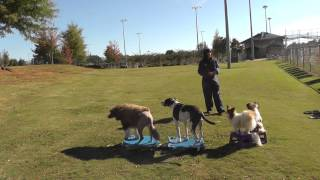 Real World Atlanta Dog Training: Off-leash Outdoor Training & Fun