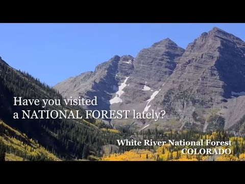 Have You Visited a National Forest Lately?