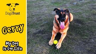 A year in the life of Gerry | #MyDogIsForLife | Dogs Trust Manchester