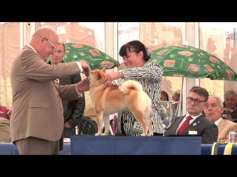Blackpool Championship Dog Show 2015 - Utility group