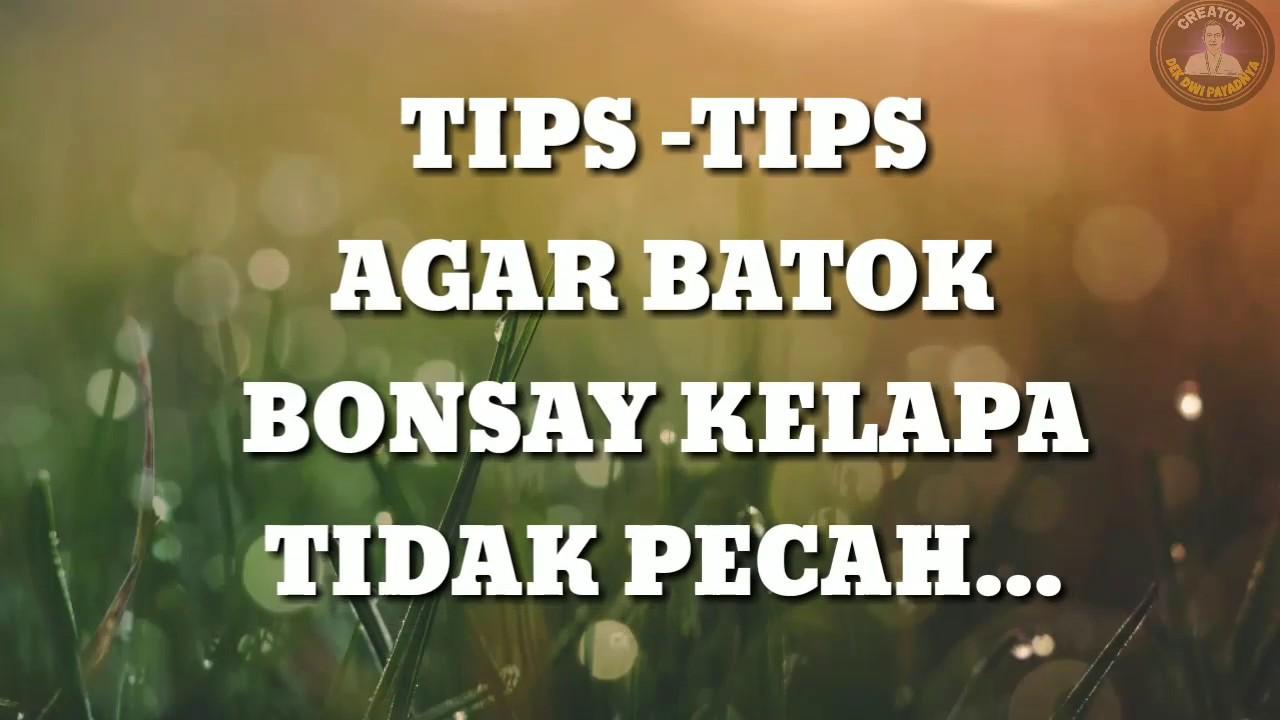 Tips Tips Mencegah Batok Bonsai Kelapa Pecah Youtube