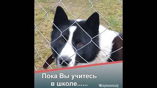 Смешные животные - как поймать собаку