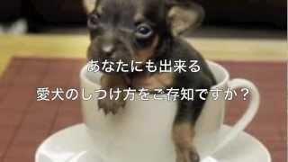 http://lastrada88.com/dog1/ ↑↑↑愛犬のしつけ無料講座はこちらをクリッ...