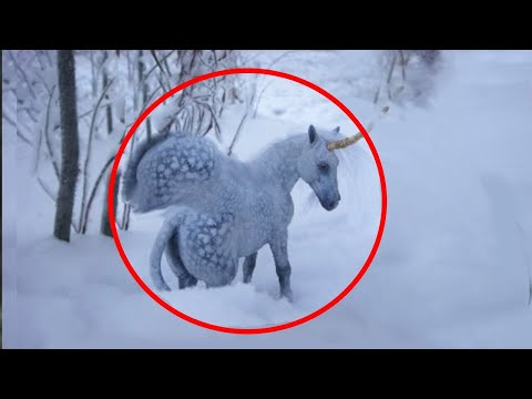 5 Unicorns Caught On Camera ♦️ Real Life Unicorns