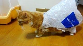 【猫 おもしろ】袋から抜けられなくなった猫がおもしろい - the cat blunders with plastic bag -