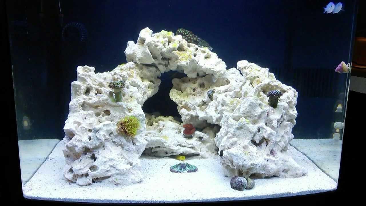 Saltwater rookie biocube 29g adding beginner corals for Beginner saltwater fish