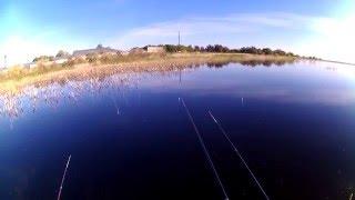 Бешеный клёв карася онлайн и подводные съёмки озеро Казачье и Круглое