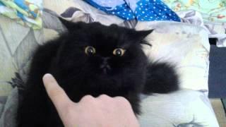 Злой и нежный кот